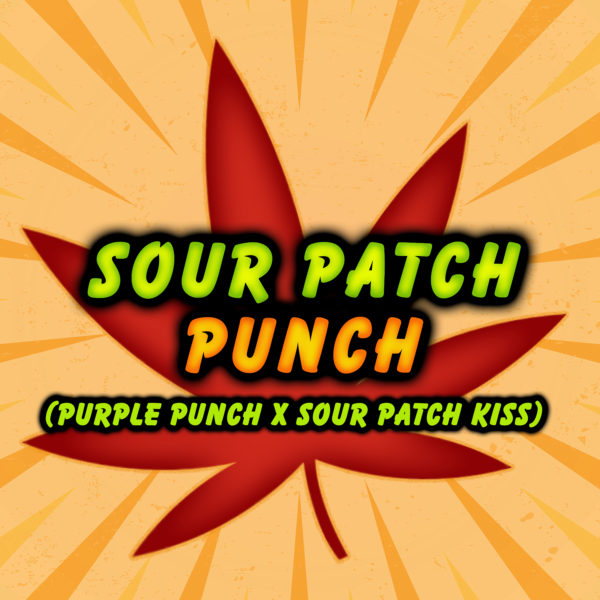 Sour Patch Punch Square