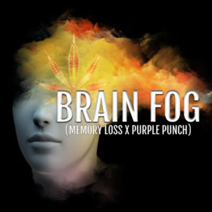 Brain Fog – Limited Release