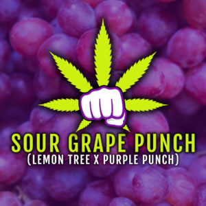 Sour Grape Punch – Limited Release
