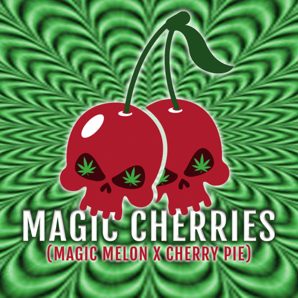 Magic Cherries Square